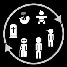 Ciclo de la vida