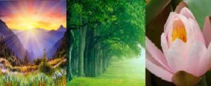 Sol-árboles-flor