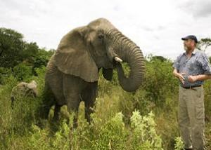 Elefante-6