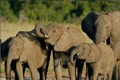 Elefantes-0
