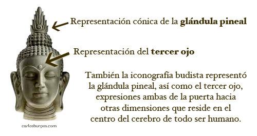 LA GLANDULA PINEAL (PARTE I) | Arbol de la sabiduria